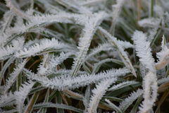 Erba su una mattina gelida di inverno Immagini Stock Libere da Diritti