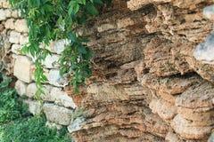 Erba su una roccia delle montagne Fotografia Stock Libera da Diritti