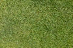 Erba su verde mettente del campo da golf Immagine Stock