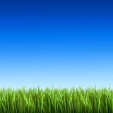 Erba sui precedenti di cielo blu Fotografia Stock Libera da Diritti