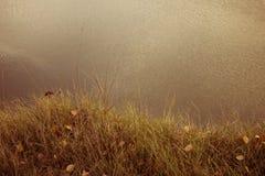 Erba sul bordo della scogliera Fotografia Stock