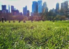 Erba sul grande prato inglese in Central Park, New York Immagine Stock Libera da Diritti