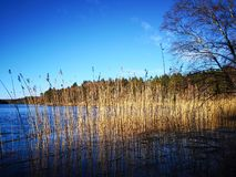 Erba sul lago immagini stock libere da diritti