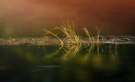 Erba sul lago con la riflessione fotografia stock