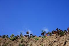 Erba sul terreno Fotografie Stock