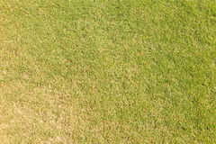Erba sul terreno da golf di verde mettente Fotografia Stock