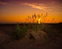 Erba sulla duna e sul tramonto di sabbia sopra la spiaggia Fotografie Stock Libere da Diritti