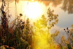 Erba sulla riva del fiume all'alba Immagini Stock Libere da Diritti