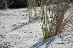 Erba sulla sabbia Immagini Stock Libere da Diritti