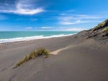 Erba sulla spiaggia di sabbia nera vicino a nuovo Plymouth, Nuova Zelanda Fotografia Stock Libera da Diritti