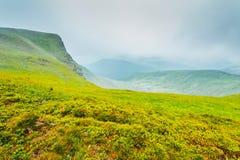 Erba sulle colline delle montagne Immagine Stock
