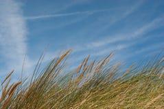 Erba sulle dune di sabbia contro l'orizzontale del cielo Fotografie Stock Libere da Diritti