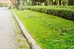 Erba tagliata in giardino Fotografia Stock Libera da Diritti