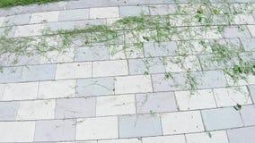 Erba tagliata su asfalto archivi video