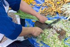 Erba tailandese immagine stock