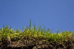 Erba-terreno e radice fotografia stock
