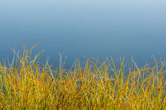 Erba variopinta da un lago Fotografia Stock