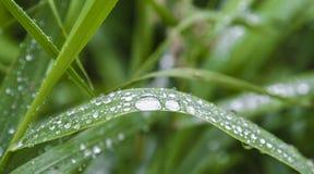 Bello fondo fresco dell'erba verde della molla Fotografia Stock Libera da Diritti
