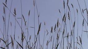 Erba in vento leggero archivi video