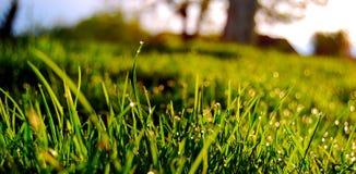 Erba verde (1) Fotografia Stock