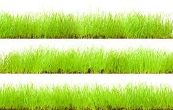 Erba verde Immagini Stock