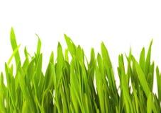 Erba verde Fotografia Stock Libera da Diritti