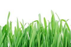 Erba verde Immagine Stock Libera da Diritti