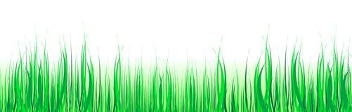 Erba verde illustrazione vettoriale