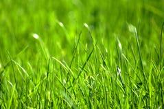 Erba verde 3 Fotografia Stock Libera da Diritti