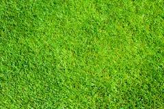 Erba verde Immagini Stock Libere da Diritti
