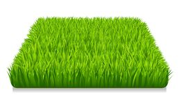 Erba verde Fotografia Stock