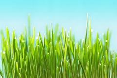 Erba verde fotografie stock libere da diritti