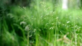 Erba verde stock footage