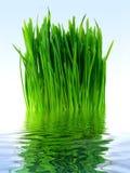 Erba verde in acqua blu Fotografia Stock Libera da Diritti