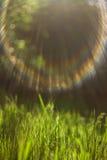 Erba verde alla luce solare Immagine Stock