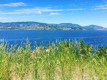 Erba verde alta sul lago e sulle montagne di trascuratezza della sommità Fotografie Stock Libere da Diritti