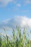 Erba verde alta variopinta di estate con lo spazio della copia Immagini Stock Libere da Diritti