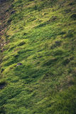 Erba verde bella della montagna Fotografie Stock
