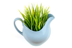 Erba verde in brocca blu Erba in barattolo Isolato su priorità bassa bianca Fotografia Stock Libera da Diritti
