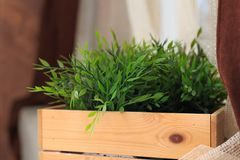 Erba verde che cresce nella scatola fotografia stock libera da diritti