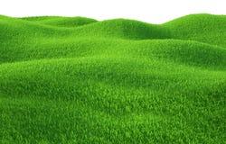 Erba verde che cresce sulle colline con fondo bianco Immagine Stock