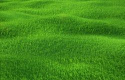 Erba verde che cresce sulle colline con fondo bianco Fotografie Stock Libere da Diritti