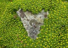Erba verde che incornicia una roccia Fotografie Stock Libere da Diritti