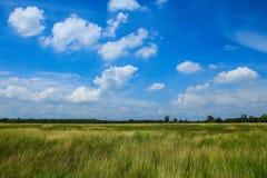Erba verde con cielo blu immagini stock