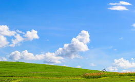 Erba verde con cielo blu Fotografie Stock Libere da Diritti