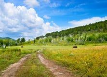 Erba verde con cielo blu luminoso Fotografia Stock