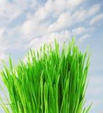 Erba verde con goccia dell'acqua Fotografie Stock Libere da Diritti