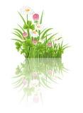 Erba verde con i fiori della camomilla e del trifoglio Fotografia Stock