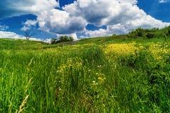 Erba verde con i fiori gialli fotografie stock