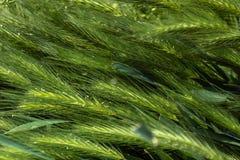 Erba verde con i raggi del sole fotografia stock libera da diritti